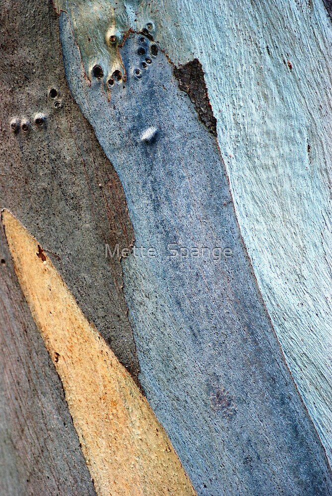 Beautiful Old Gum Tree - Australia by Mette  Spange