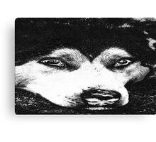Charcoal Husky Canvas Print