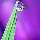Water Refraction in Rain Drop 2 by Debbie Sickler