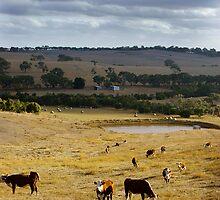 Typical Australian Terrain by Michael Humphrys
