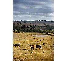 Typical Australian Terrain Photographic Print