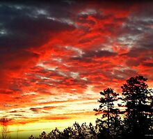 A Fire in the Sky by Lisa Taylor