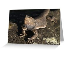 Don't mess with me - Eastern Bearded Dragon Greeting Card