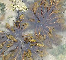 Rock pools by Melissa Purves
