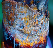 Rustic Pail by Julie Marks