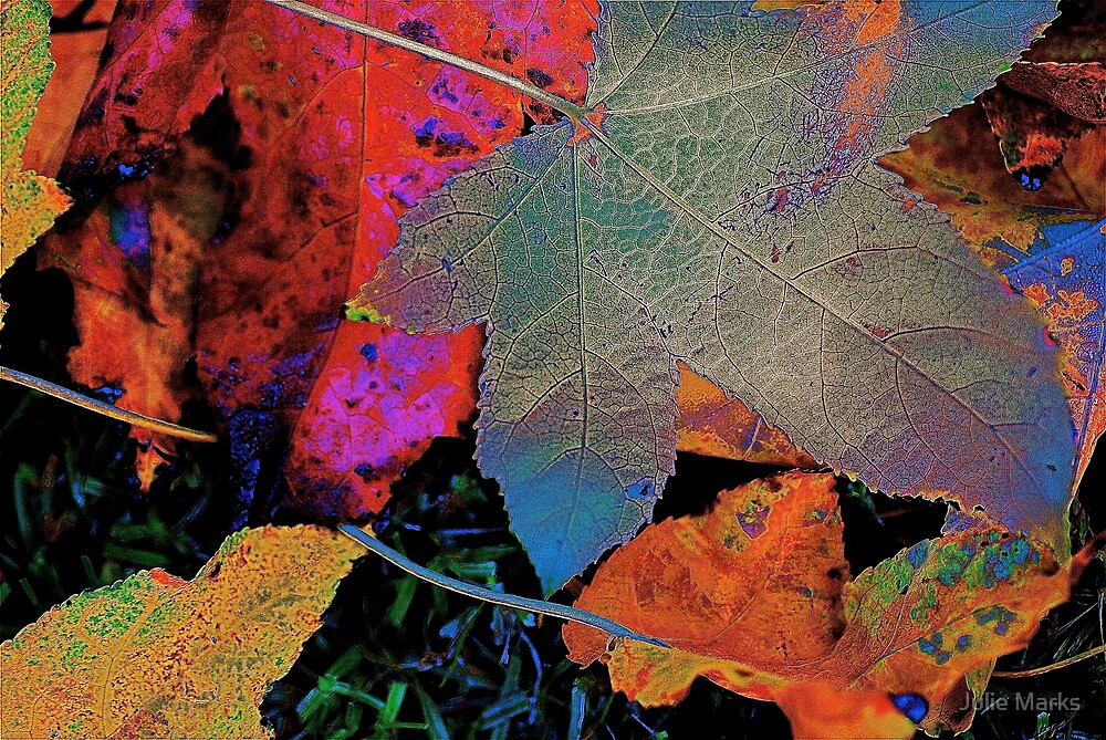 Leaf Abstract #2 by Julie Marks