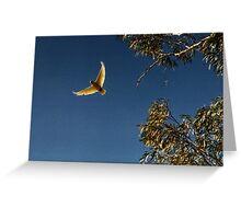 Corella Leaves! Greeting Card
