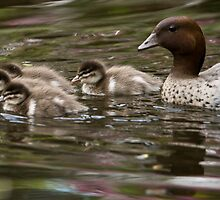 Out with the Family by David de Groot