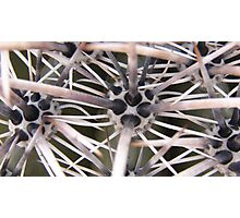 Cactus Protectors Photographic Print
