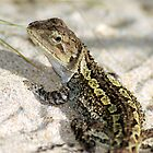 Wonderful Jacky Lizard - Australia by Mette  Spange