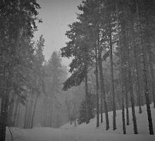 Snowy Winter Day in pine trees forest by Vladimir Tretyakov
