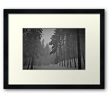Snowy Winter Day in pine trees forest Framed Print