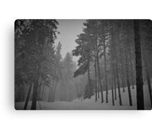 Snowy Winter Day in pine trees forest Canvas Print