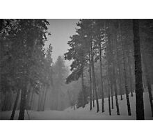 Snowy Winter Day in pine trees forest Photographic Print