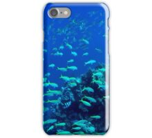 Shoal of fish  iPhone Case/Skin