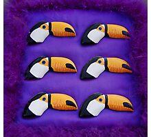 Purple Fluffy Toucans Photographic Print