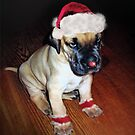"""Stop Calling Me """"Rudolph"""" !  by Bine"""