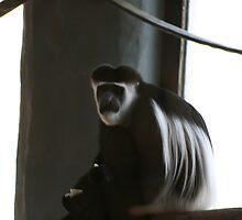 Bored monkey  by trysten