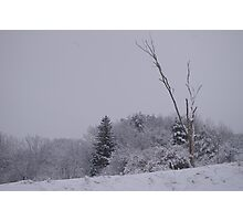 Lonely tree Photographic Print