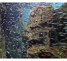 Shoaling anchovies Photographic Print