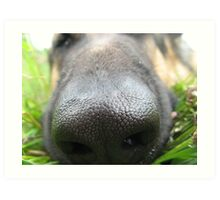 DOG NOSE  Art Print