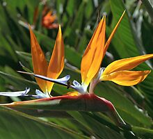 bee and bird of paradise by kevin smith  skystudiohawaii