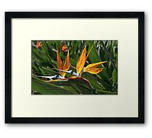 bee and bird of paradise Framed Print