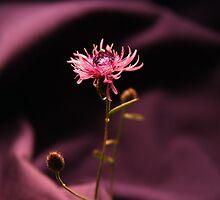 Blooming Amethyst by Kristi Lockwood