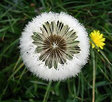 ICE ROSE DANDELION  by SofiaYoushi