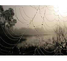 Spider's Morning Photographic Print