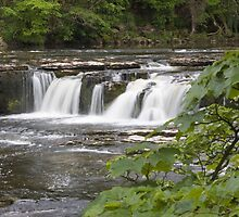 Aysgarth Upper Falls by Peter Reid