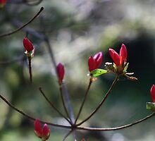 Spring Botanicals - Bokeh Buds by Mark Haynes Photography