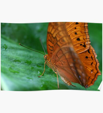 Butterfly Macro 2 Poster