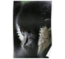 Animal Portraiture Poster