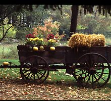 Fall In the Country by madron