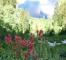 Mountain Paradise by pbeltz