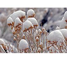 Winter Plants Photographic Print