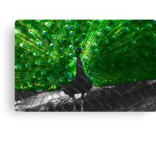 Cock Of The Walk II Canvas Print