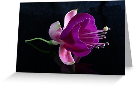 Fuchsia V by Tom Newman