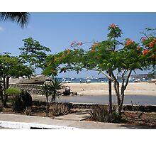 Galapagos Photographic Print