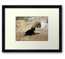 Kitty on the hunt Framed Print