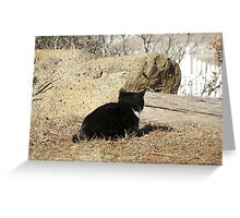 Kitty on the hunt Greeting Card