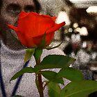 Red rose by Nicki Kenyon