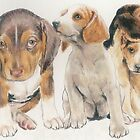 Beagle Puppies by BarbBarcikKeith