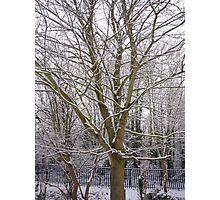 winter coat Photographic Print