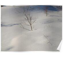 Silky winter Poster