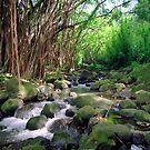 Nuuanu Stream Oahu by kevin smith  skystudiohawaii
