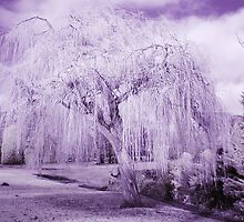 Weeping Willow in Infrared by Rob Smith