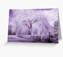 Weeping Willow in Infrared Greeting Card