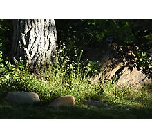 Sun Spot Photographic Print